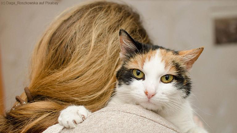Toxoplasmose – Die Gefahr aus dem Katzenklo