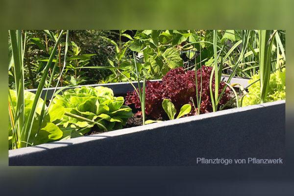 Kreative Gartengestaltung mit eckigen Pflanztrögen