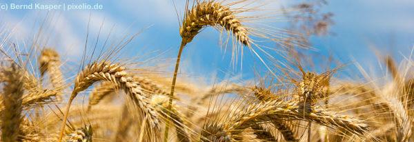 Zöliakie: Wenn man Weizen & Co. nicht verträgt