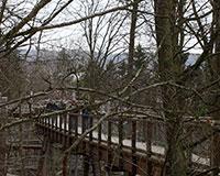 Ein Besuch im obersten Stockwerk der Bäume