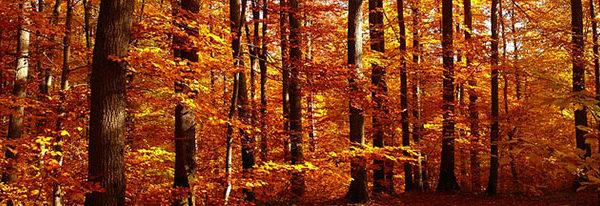 Der goldene Herbst lockt Familien aus dem Haus
