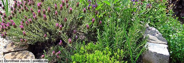 So machen Sie Ihren Garten zu einem Kräuter-und Vitamin-Tempel