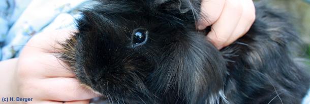 meerschweinschen: Beliebte Haustiere für Kinder