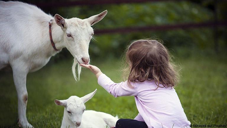 Warum Ziegenmilch ein guter Ersatz für Kuhmilch ist und was diese Milch zu einem besonderen Lebensmittel macht